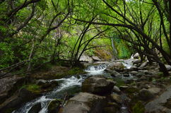 Hidden Cascade. In a dark place full of trees in Patagonia, Argentina Stock Image