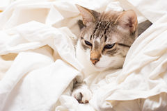 Hidden cat Royalty Free Stock Image