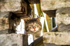 Hidden cat instense gaze Royalty Free Stock Photos