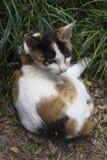 Hidden cat Royalty Free Stock Photos