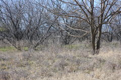 Hidden Cross. This was taken at Holland Lake Park in Weatherford Texas Stock Photos