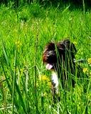 Hidden Dog royalty free stock photo