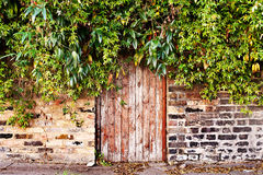 Hidden door. Door that has been hidden by overgrown foliage royalty free stock images