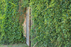 Hidden doors Stock Photo