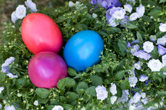 Hidden easter eggs Royalty Free Stock Images