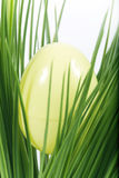 Hidden egg. Yellow easter egg hidden in green grass royalty free stock image