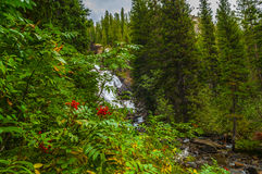 Hidden Falls - Grant Teton Royalty Free Stock Photography