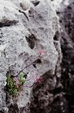 Hidden flower on a rock royalty free stock images