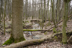 Hidden forest brook Royalty Free Stock Photo