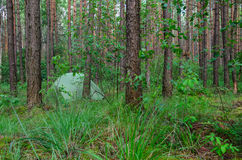 Hidden in forest pitched tent - example of stealth camping Royalty Free Stock Images