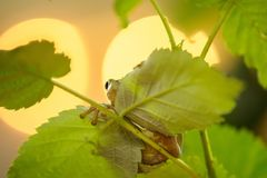 Hidden frog with backlights Royalty Free Stock Photos