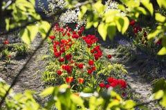 Hidden Garden Stock Image