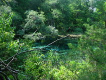 Hidden Gem. A spring we happened upon while hiking through the woods at Ichetucknee Springs State Park.  The discovery thrilled us to the core, as we had this Royalty Free Stock Photo