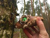 Hidden geocache in the forest  Stock Photography
