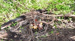Hidden Gnomes: Gnomesville, Western Australia Royalty Free Stock Photo