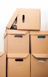 Hidden kitty Royalty Free Stock Photo