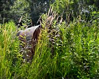 Hidden Mail Box. A rural mail box hidden behind overgrown brush and weeds Royalty Free Stock Photography