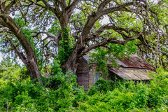 Hidden Old Abandoned Shack in Texas Royalty Free Stock Images