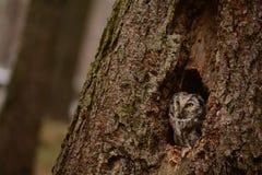 Hidden owl Stock Images