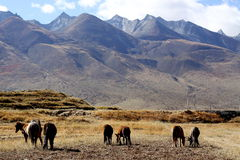 Hidden pasture in tibet Royalty Free Stock Photos