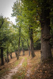 A hidden path in the wood. In autumn Royalty Free Stock Photo