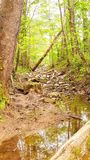 Hidden path in the woods royalty free stock photo