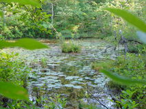 Hidden Pond. Pond hidden away in the middle of the woods stock photography