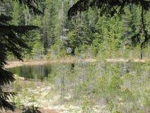 Hidden Pond Royalty Free Stock Image