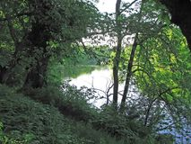 Hidden River for branches of trees. Trees overhanging the river, a walk along the river bank Stock Photography