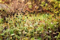 Hidden secret garden in autumn Stock Photo
