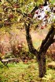 Hidden secret garden in autumn Stock Image
