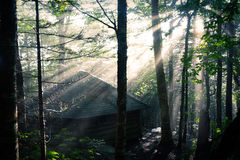 Hidden Shelter in the Woods. Beautifully lit by sun rays after the storm cleared Stock Photography