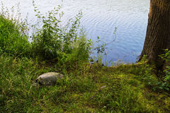 Hidden Snapping Turtle Stock Photography