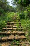 Hidden staircase in the jungle surrounded by green vegetation royalty free stock image