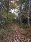 Hidden Trail Stock Photography