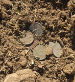 Hidden treasure Stock Images