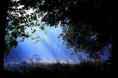 Hidden Tree. Background Tree hidden in Mist Stock Photography