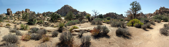 Hidden Valley. In Joshua Tree National Park with large number plants for such a small desert Royalty Free Stock Image