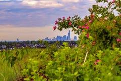 City Peeking Through Flower Bushes royalty free stock photography