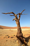 Hidden Vlei, Namib desert,Namibia Royalty Free Stock Photos