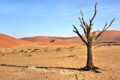Hidden Vlei, Namibia. Hidden Vlei in the southern part of the Namib Desert, in the Namib-Naukluft National Park of Namibia Stock Images
