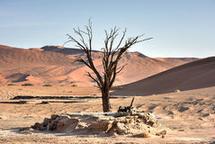 Hidden Vlei, Namibia Stock Photo