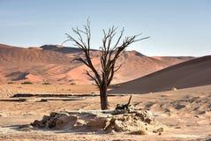 Hidden Vlei, Namibia. Hidden Vlei in the southern part of the Namib Desert, in the Namib-Naukluft National Park of Namibia Stock Photo