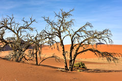 Hidden Vlei, Namibia. Hidden Vlei in the southern part of the Namib Desert, in the Namib-Naukluft National Park of Namibia Royalty Free Stock Photography