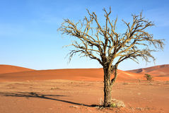 Hidden Vlei, Namibia. Hidden Vlei in the southern part of the Namib Desert, in the Namib-Naukluft National Park of Namibia Royalty Free Stock Photo