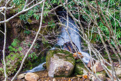 Hidden Waterfall in the Woods Stock Images