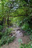 Hidden way in the jungle surrounded by green vegetation stock images