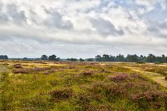 Hiddensee heather with cloudscpe. HDR shot of Hiddensee heather with cloudscpe Stock Photo
