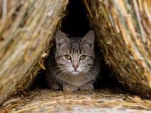 Hidding猫 免版税库存图片