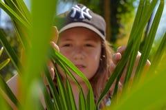 Hidding dietro le foglie verdi immagini stock